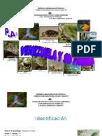 PA-VENEZUELA-Y-SU-FAUNA....doc