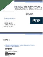 56896270-Cirugia-Bucal-Relacion-de-Los-Dientes-Con-Las-Fosas-Nasales-y-El-Seno-Del-Maxilar.ppt