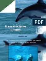 Carlos Michel Fumero - El Encanto de Los Delfines