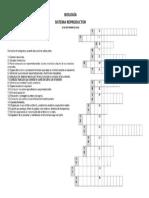 Crucigrama Sistema Reproductor