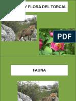 Fauna y Flora del Torcal