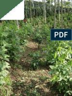 Tejiendo la red biocultural de conservación y desarrollo. Las experiencias de reapropiación de los recursos naturales por los pueblos indígenas.pdf