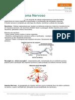 Sistema Nervoso Descomplica