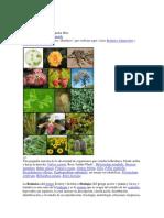 Botánica.docx