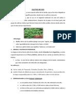 CULTIVO DE OCA   RESUMEN (2).docx