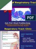 Histo of respiratory tract2