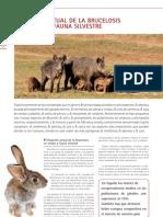 cys_33_36-38_Situación actual de la brucelosis en cerdos y fauna silvestre