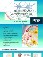Microestructura Del SN