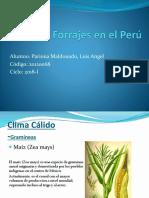 Pastos y Forrajes en El Perú