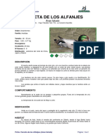 Ficha Cerceta de Los Alfanjes _anas Falcata