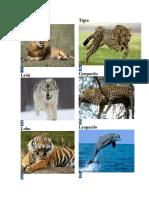 Animales Salvaje1