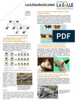Efectos de la endogamia en la Reproducción Animal-Mariana Lineth Orozco Ricardo
