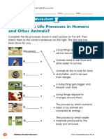 Living Things and Their Life Processes Worksheet