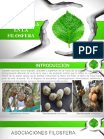Filosfera.pptx