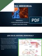 Sistema Sensorial (Consolidado)