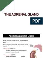 Adrenal Medulla 888