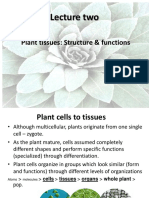 2nd Lecture Plant Tissues