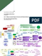 Mapa Conceptual Algunas Funciones Del Sistema Nervioso