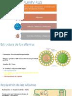 Togavirus y Flavivirus