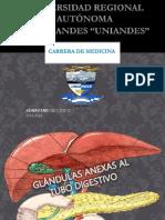 Anatomia de Higado Vesicula Biliar y Pancreas