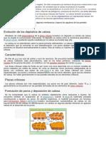 Producto Académico 1 (2)
