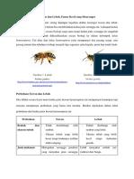 Mengenal Perbedaan Lebah Dan Tawon