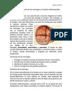 Anatomía y Función de Las Meninges y El Líquido Cefalorraquídeo