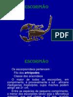 escorpião -riscos