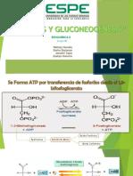 Glucolisis y Gluconogenesis