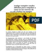 Las Hormigas Empaladoras
