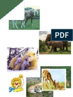 Animals Pic