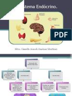 4. Sistema Endócrino