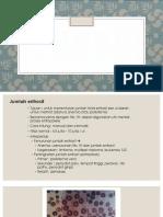 PR Hematologi