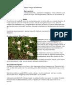 Plante Complante comestibileestibile
