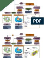 diagrama celula
