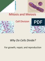 mitosis-meiosis-1