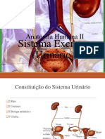 Anatomia EF 2013 Módulo Sistema Excretor