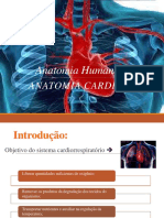 Anatomia EF 2014 Módulo Cardiovascular
