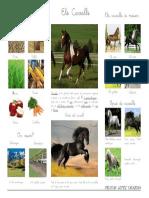 Ells Cavalls 1