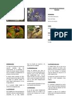 Aves en Peligro de Extincion de Boliviana