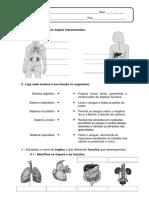 Ficha de Estudo do Meio 3º ano.pdf