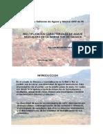 Productores Sierra Sur de Oaxaca