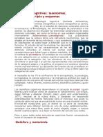 Estructuras cognitivas.docx