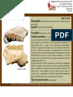 Ficha Fosil