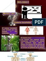 esqueletohumano-biologiaII