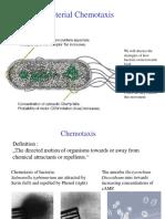 Flagella Movement