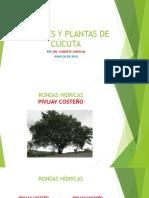 Árboles y plantas de Cúcuta