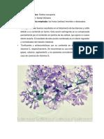 Reaccion en Cadena Polimerasa (1)