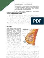 Anatomia glandei mamare