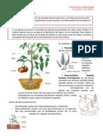 Las Plantas Vasculares